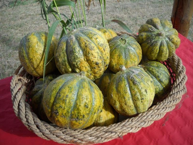 melone rospo
