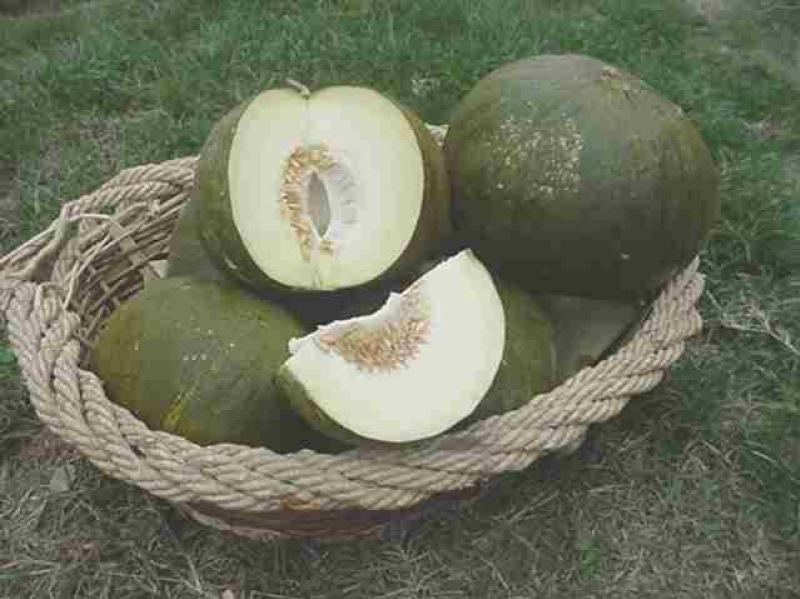 melone d'inverno